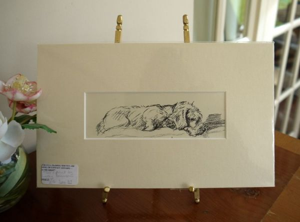 Little Wire Haired Dachs lying down - Dax D3 -  1930's print by Lucy Dawson